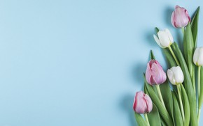 Picture flowers, tulips, pink, white, white, pink, flowers, beautiful, tulips, spring