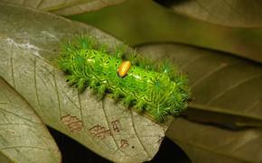 Picture macro, caterpillar, nature