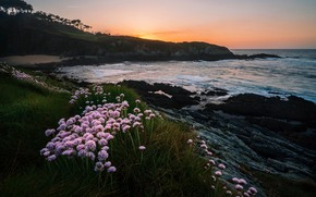 Picture sea, grass, sunset, flowers, rocks, shore, the evening, surf, pink, Spain