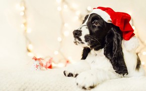 Picture face, holiday, black and white, portrait, dog, Christmas, New year, lies, profile, garland, bells, light …