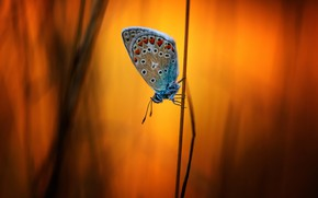 Picture nature, background, butterfly, a blade of grass, bokeh