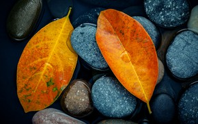 Wallpaper autumn, leaves, stones, yellow, yellow, stone, autumn, leaves, autumn