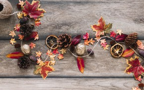 Picture autumn, leaves, background, tree, colorful, nuts, bumps, wood, background, autumn, leaves, autumn, maple
