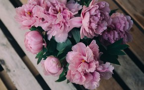 Picture flowers, pink, peonies