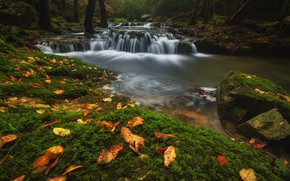 Picture autumn, forest, leaves, water, stones, waterfall, stream, river, waterfalls, pond, thresholds