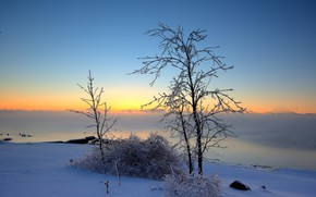 Picture winter, snow, trees, landscape, nature, beauty, morning, panorama, icing