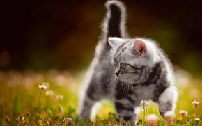 Picture flowers, grey, baby, walk, kitty, bokeh