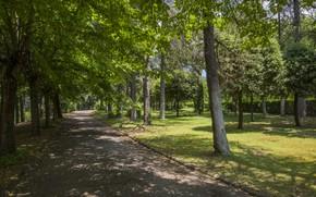 Picture trees, Park, Italy, tree, italy, arezzo