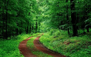 Picture green, road, tree, forrest, ambience