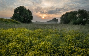 Picture trees, landscape, flowers, nature, dawn, beauty, meadow, grass