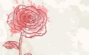 Picture background, figure, rose
