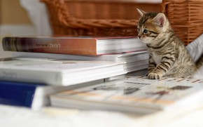 Picture basket, books, on the table, tabby kitten