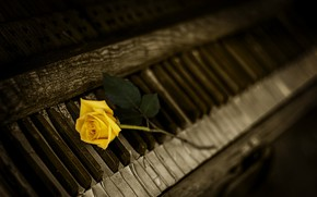 Picture YELLOW, PIANO, ROSE, KEYS, PIANO
