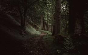 Picture forest, trees, nature, Scotland, path, Loch Maree, Achnasheen