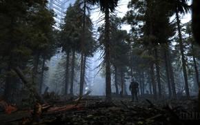 Picture Trees, Forest, Stalker, logo, Logo, Stalker, Chernobyl, S. T. A. L. K. E. R. 2, …