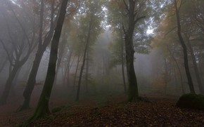 Picture autumn, forest, trees, fog, foliage, morning, falling leaves