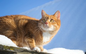 Picture cat, the sky, look, snow, red, Pauline Khrol