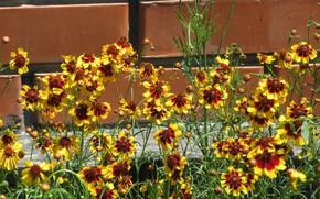Picture flowers, brick, June, Mamala ©, summer 2018