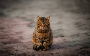 Picture road, cat, cat, look, grey, tile, the sidewalk, sitting, striped, Kote, lonely, street