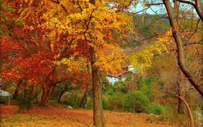 Picture Autumn, Trees, Park, Fall, Foliage, Autumn, Trees, Leaves