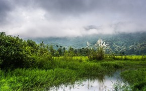Picture water, landscape, nature, fog, beauty, morning, channel