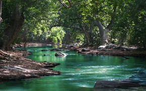 Picture forest, summer, trees, landscape, nature, stones, river