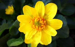 Picture flower, spring, April