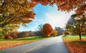 Wallpaper falling leaves, Sunny day, autumn trees, asphalt road
