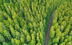 Picture road, forest, trees, nature, pine, the view from the top