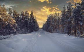 Picture winter, road, forest, snow, landscape, nature