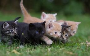Picture grass, kittens, kids, gang