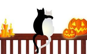 Picture cats, candles, pumpkin, Halloween, 31 Oct