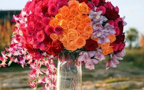 Picture roses, bouquet, orchids