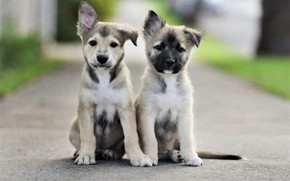 Wallpaper road, dogs, look, puppies, road, faces, sitting, dogs, look, faces, sitting, puppies