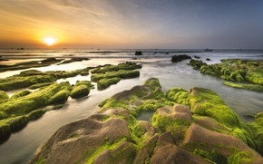 Wallpaper sea, the sky, the sun, algae, landscape, sunset, nature, stones, dawn, shore, coast, horizon, pond, ...