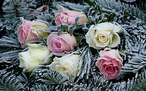 Picture frost, flowers, roses, needles