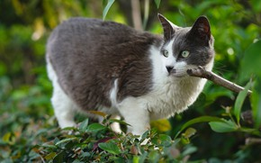 Picture greens, cat, cat, look, face, leaves, branches, nature, pose, grey, background, foliage, garden, the bushes, …