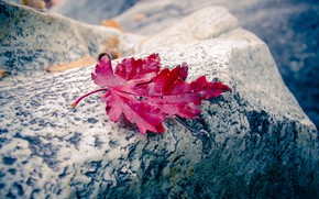 Picture autumn, red, stone, autumn leaf