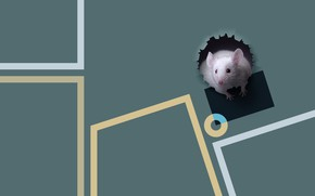 Picture animals, minimalism, mouse, Pets, laconic, photography and graphics