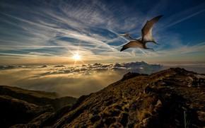 Picture the sky, flight, sunset, rendering, dinosaur, pterodactyl, доисторичсекое животное