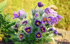 Picture light, flowers, spring, garden, purple, flowerbed, lilac, cross, Bush