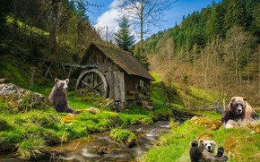 Picture forest, rendering, bears, mill, water mill, bears