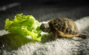 Picture greens, light, the dark background, carpet, turtle, pile, muzzle, shadows, cub, baby, bug, little, lunch, …