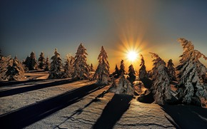 Picture winter, forest, the sky, the sun, rays, light, snow, sunset, bright, nature, view, the evening, …