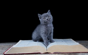 Picture look, book, black background, kitty, sitting