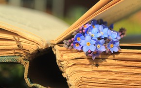 Picture macro, flowers, book, page, forget-me-nots