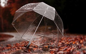 Picture road, autumn, leaves, drops, trees, rain, umbrella