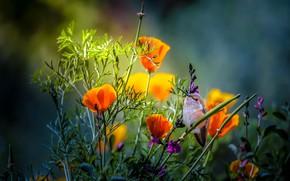 Wallpaper summer, flowers, nature, Hummingbird, bird, Thai Phung