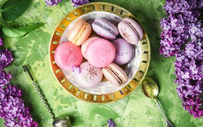 Picture flowers, flowers, lilac, macaroons, macaron, lilac, macaroon