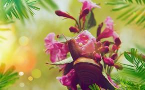 Picture leaves, macro, flowers, snail, pink, bokeh